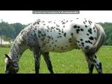 «лошади» под музыку Песни нашего века - Лошади в океане. Picrolla